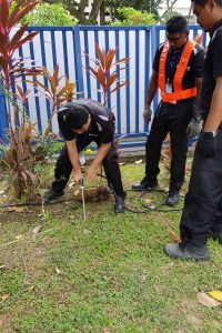Rodding treatment for termite